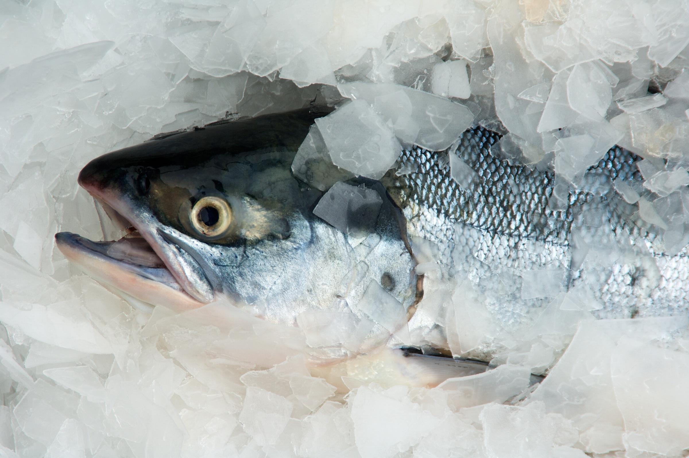 Photo of Zeeforel verkocht op de markt