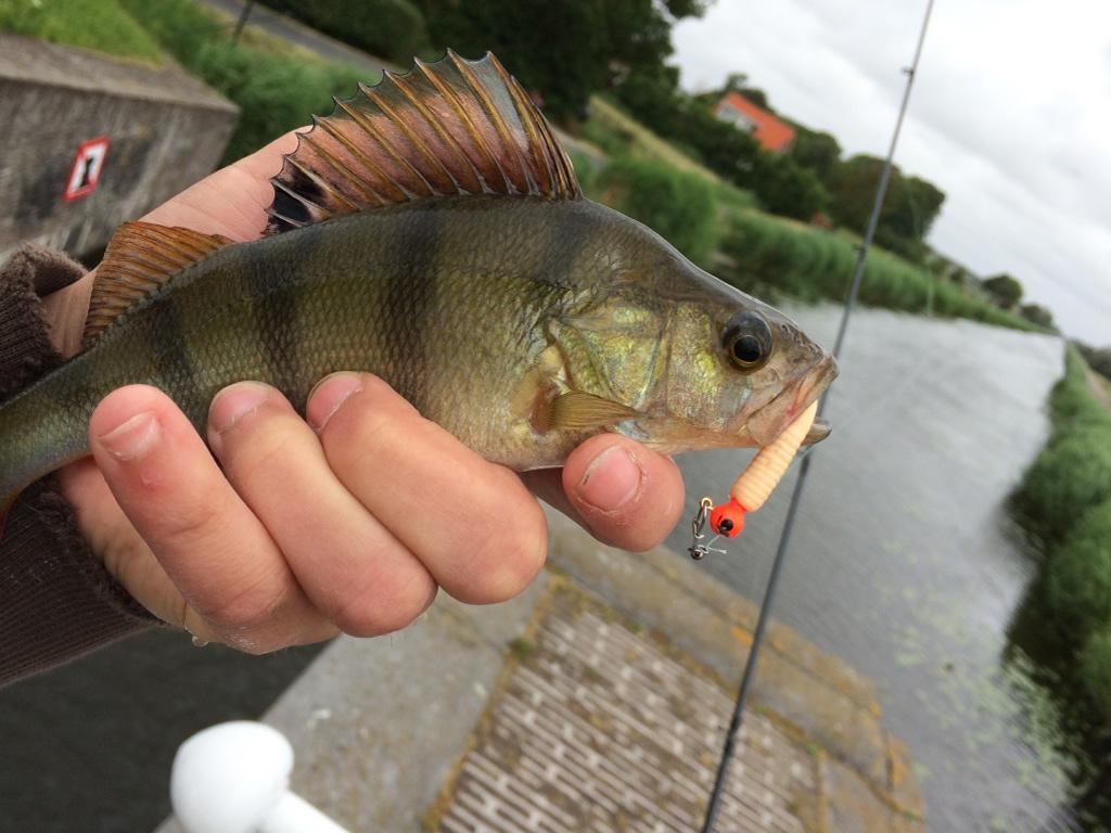Photo of Baars vissen in de stad, altijd prijs!