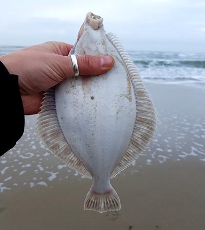 vissen op texel platvis